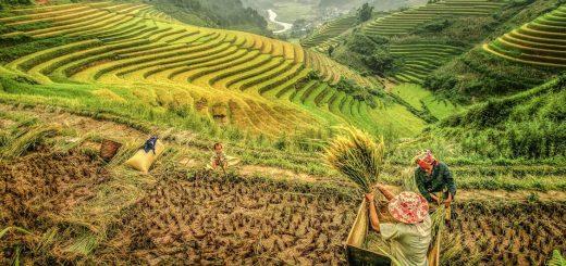 Hiking, Minority People and Ha Long Bay